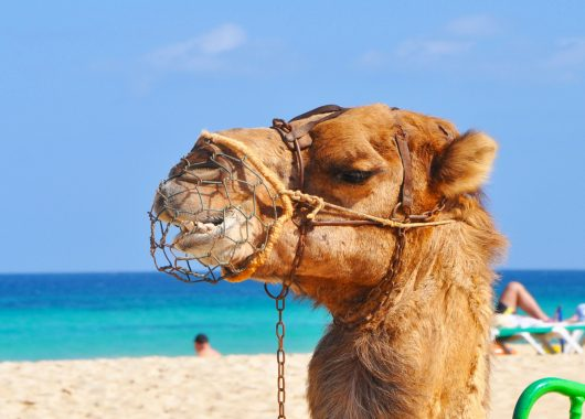 Last Minute: 1 Woche Ägypten im 3,5* Resort inkl. HP, Flug und Transfer ab 223€