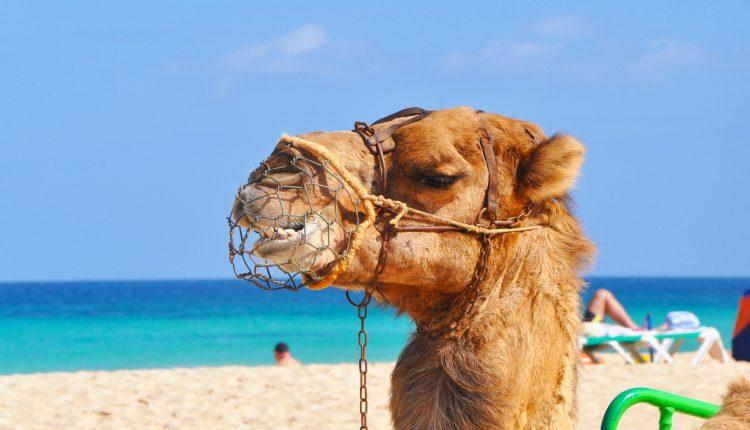 1 Woche Ägypten im 5* Award-Resort mit All In, Flug, Rail&Fly und Transfer ab 386€