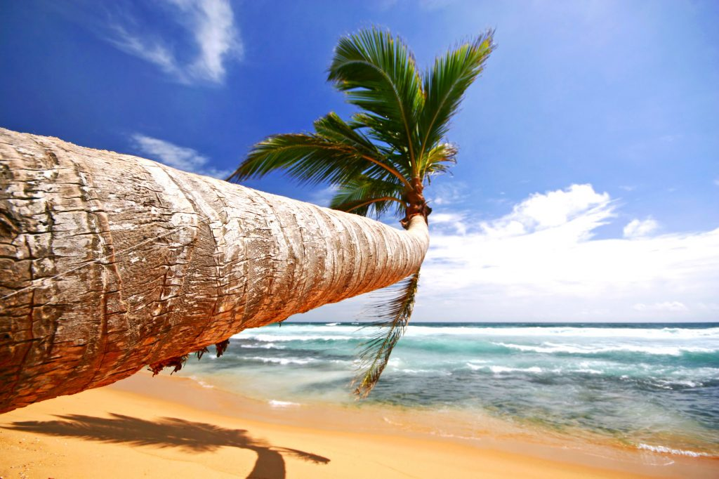 tropical beach sri lanka karibik