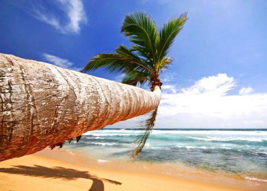 13 Tage Sri Lanka im 5* Hotel inkl. Meerblick, HP, Flug und Transfer ab 992€