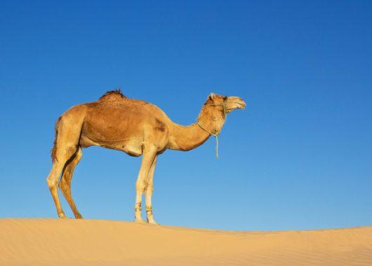 Last Minute nach Hurghada: 1 Woche im 4* Hotel mit All In, Flug und Transfer ab 310€