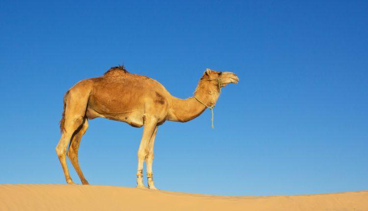 2 Wochen Sharm el Sheikh im 3* Hotel mit Frühstück, Flug & Transfer ab 225€