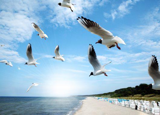 TUI Aktionscode: 50€ pro Person auf Reisen an die Ostsee