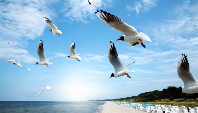 Nordseeurlaub: 3 – 6 Tage in Büsum im 4*Hotel mit Frühstück und Eintritt in die Meereswelten ab nur 139€ für 2 Personen