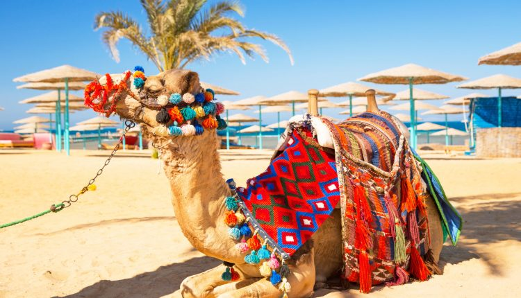 Last Minute: 9 Tage Marsa Alam im 4,5* Resort mit All In, Flug & Transfer ab 254€
