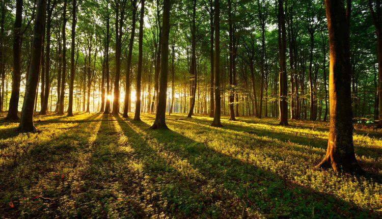 3 Tage Wellness im Bayrischen Wald inkl. Halbpension und Massage ab 199€