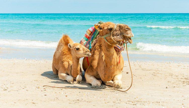 All Inclusive in Ägypten: 1 Woche im 4*Hotel mit Flügen, AI, Transfers und Zugticket ab 397€