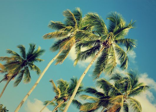 7 Tage Dominikanische Republik im November/Dezember: 3* Hotel All Inclusive, Flug & Transfer ab 752€