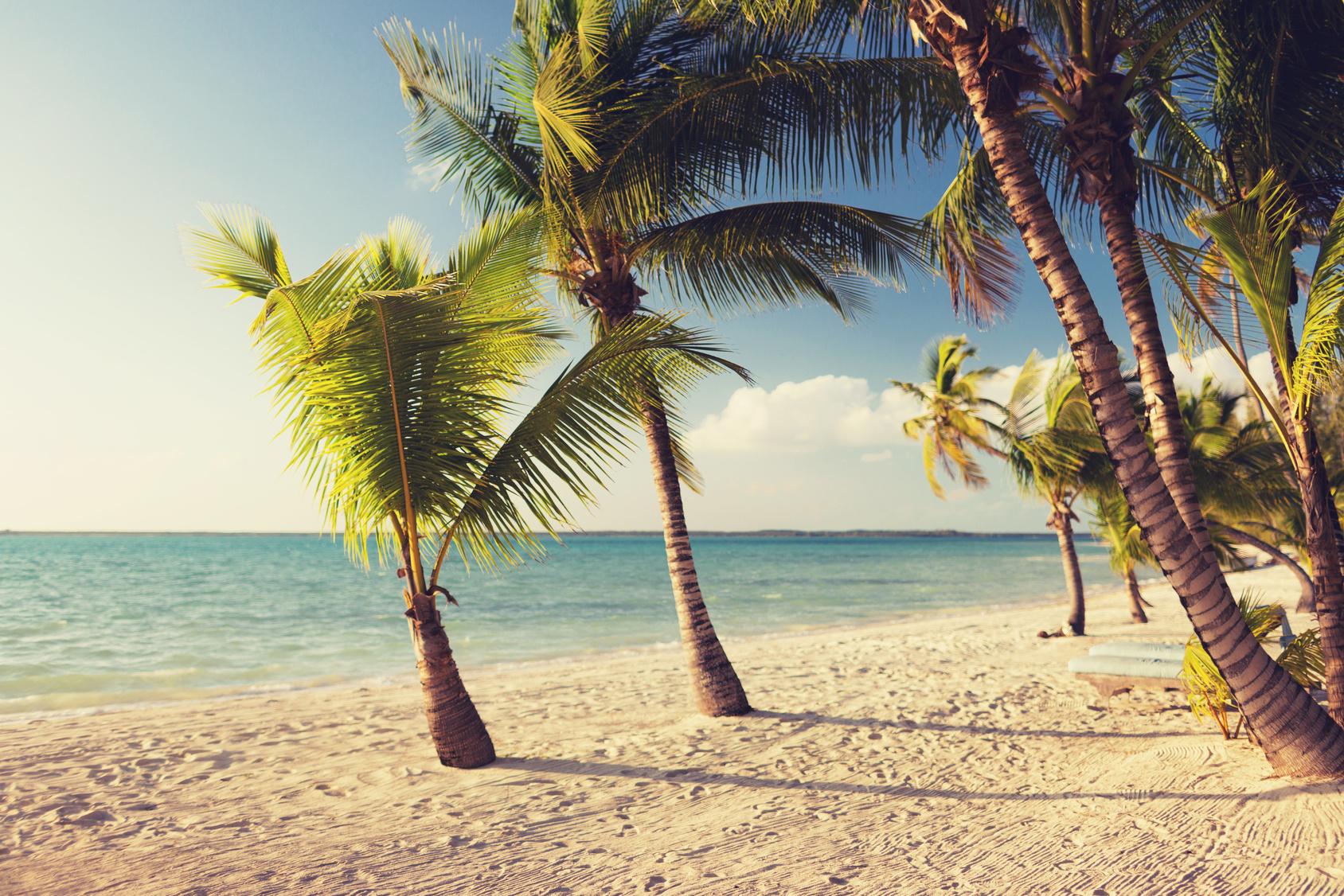 Karibik Palmen Strand