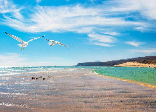 Fuerteventura: Eine Woche im sehr guten 3* Hotel inklusive Flug & Frühstück ab 340€ pro Person