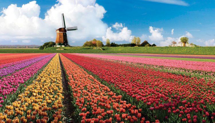 3 oder 4 Tage Tulpenfrühling in Amsterdam im 3* Hotel erleben für 138€