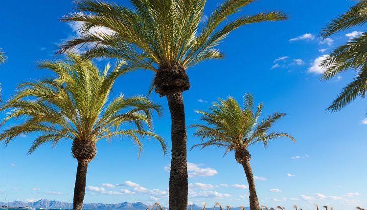 5 Tage Mallorca im 4* Hotel inkl. HP, Flug und Transfer ab 338€