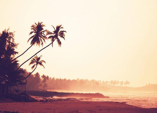 Frühbucher: 12 Tage Sri Lanka im 5* Bungalow mit All In, Flug, Rail&Fly und Transfer ab 949€