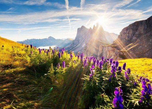 3 Tage Südtirol im 3* Hotel Waldheim inkl. Halbpension, Spa und Aktivprogramm ab 89€