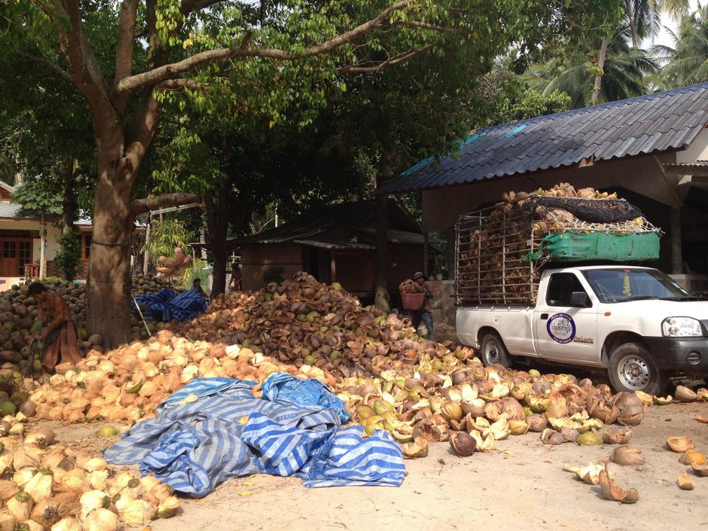 Kokosnussfarm Kho Phangan