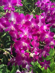 orchideengarten_singapur
