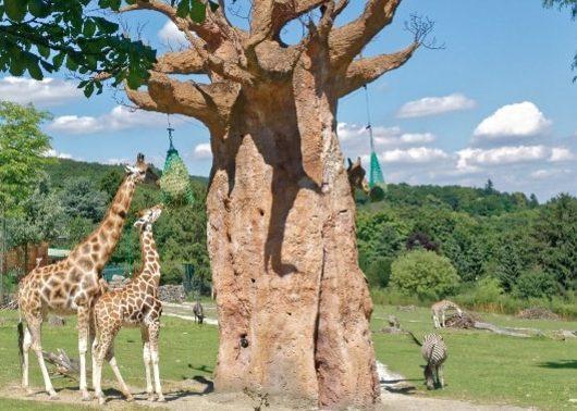 2 oder 3 Tage im 4* Hotel Bad Soden inkl. Halbpension und Zoo-Tagesticket ab 69€