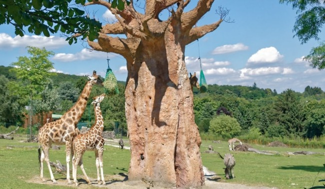 2 oder 3 Tage im 4* Hotel Bad Soden inkl. Halbpension und Zoo-Tagesticket ab 69€