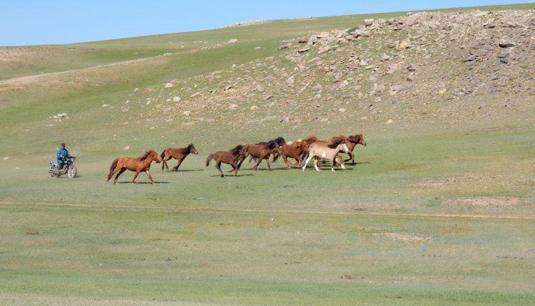 Reisebericht Mongolei – Oder wie man in neun Tagen trinkfest wird