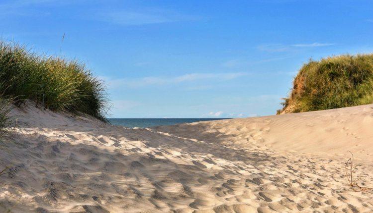 Dänemark mit Hund: So wird der gemeinsame Strandurlaub perfekt